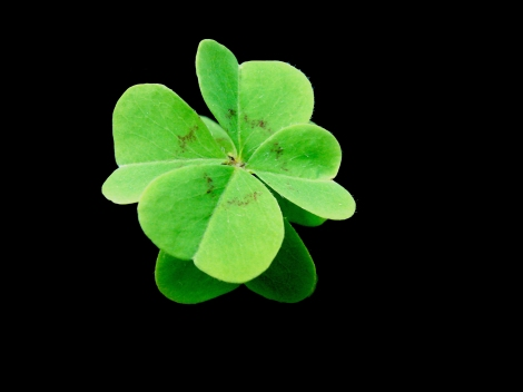 4 leaf clover with a black background